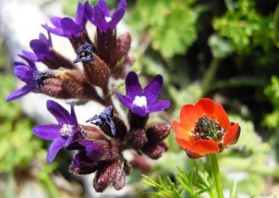 Spring in Amorgos
